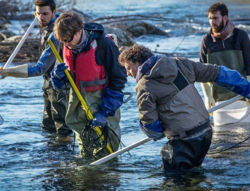 Il monitoraggio della fauna ittica