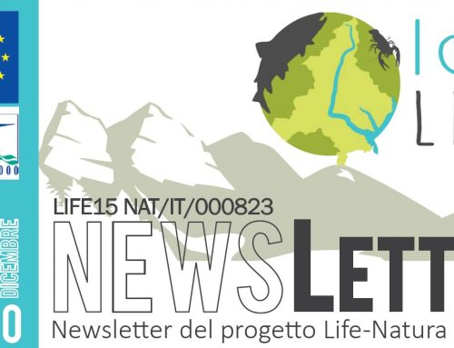 Newsletter n.5 – Dicembre 2020