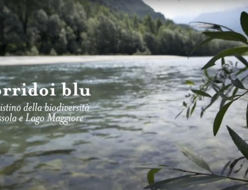 Pubblicato il video documentario di progetto